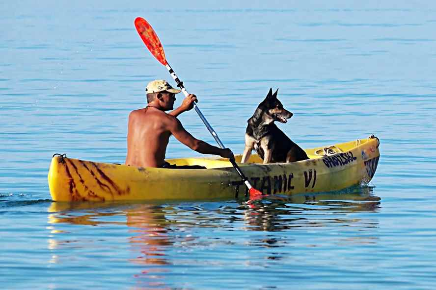 Best Kayak for Dogs: Pet-friendly Kayaks for You & Your Dog