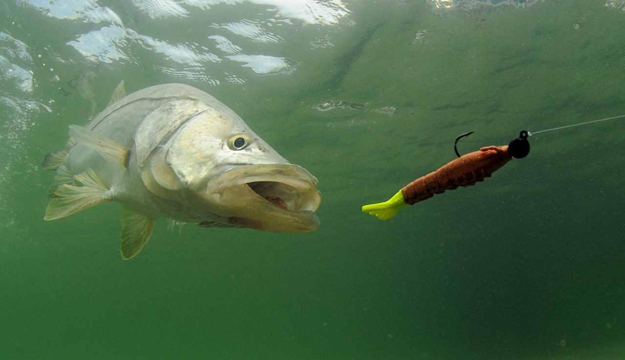 Fishing underwater fish and lure