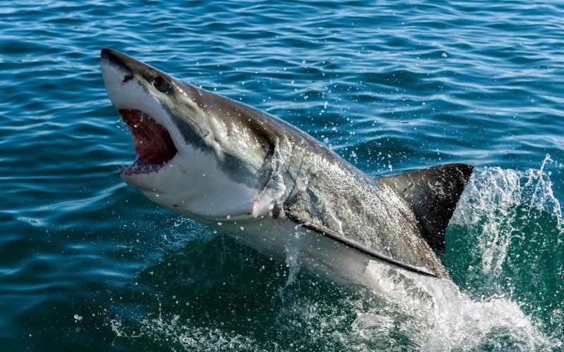 Shark Fishing 3