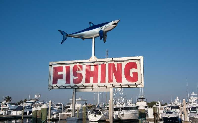 Shark Fishing 4